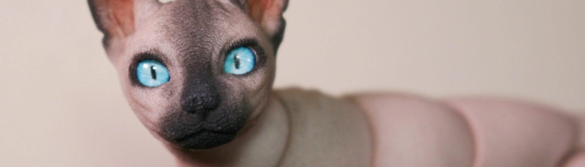 Sphynx Kat 3D Printen CRDREI